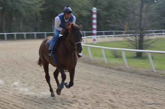 training horses in Ocala